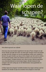 Achterflap van boek Waar lopen de schapen? Kijk en lees met ons mee.
